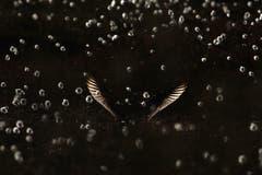 Hier wird ein Regenbrachvogel gezeigt. Der Fotograf gewann mit der Aufnahme den ersten Preis in der Kategorie «Allgemein». (Bild: Ari Tervo, Finnland)