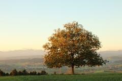 Herbstliche Morgenstimmung. (Bild: Irene Wanner (Egolzwil, 25. September 2018))