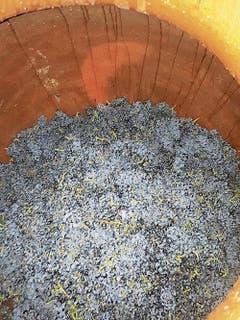 Mittlerweile konnten Trauben eingefüllt werden. (Bild: PD)