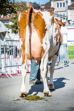 Red Holstein Kuh Ilena beendete das Kuhfladen-Roulette. Bild: Andrea Stalder