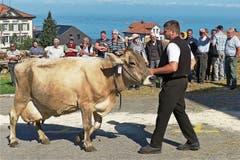 Begutachtet vom zahlreichen Publikum zeigten die stolzen Besitzer ihre schönsten Kühe. (Bild: Ulrike Huber)