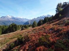 Wunderbare Landschaft auf der Moosalp. (Bild: Bruno Ringgenberg, 29. September 2018)