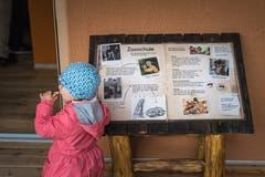 Die Zooschule ist quasi das Herzstück der neuen Löwenanlage und eine Hommage an Zoogründer Walter Pischl, besser bekannt als Tierli Walter.