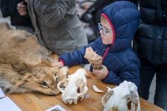 Wie fühlt sich ein Löwenfell an? Und wie sieht ein Schädel aus? Dies und mehr erfuhren Gross und Klein von einer Tierpflegerin.
