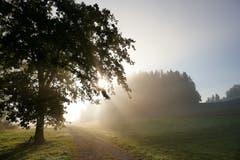 Herbstliche Morgenstimmung. (Bild: Hedy Muff-Ruckli (Willisau, 27. September 2018))