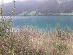 Am schönen Lungernsee bei Kaiserstuhl (Bild: Bruno Ringgenberg, 2. September 2018)