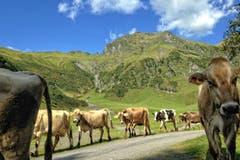 Das Ende der Alpzeit in der Alp Siez. (Bild: Toni Sieber)