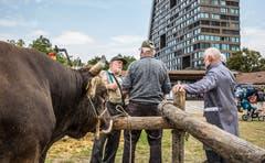 Stierenmarkt Zug. (Bild: Daniel Hegglin, 6. September 2018))