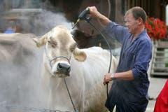 In Sörenberg werden die Kühe gewaschen und vorbereitet für den Alpabzug (Bild: Philipp Schmidli (26. September 2009)