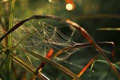 Spinnennetz - eine Konstruktion, die vorwiegend dem Beutefang dient. (Bild: Irene Wanner, 9. september 2018)
