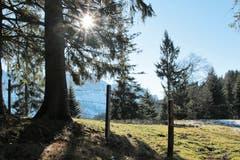 Ein schönes neues Jahr und viele Sonnenstrahlen. (Bild: Irene Wanner (Heiligkreuz, 1. Januar 2019)
