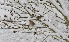 Harmonisches Winterbild. (Bild: Ruedi Dörig)