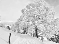 Eine bezaubernde Winterlandschaft auf der Rigi. (Bild: Markus Brülhart (10. Januar 2019))