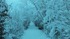 Ein verschneiter Weg in Giswil. (Bild: Claudia Halter, 10. Januar 2019)