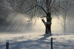 Wunderbare Winterstimmung dank Sonne, Nebel und glitzerndem Schnee.