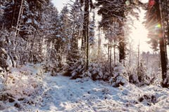Die Wintersonne durchflutet den tiefverschneiten Wald in Rain. (Bild: Xaver Husmann, 11. Januar 2019)