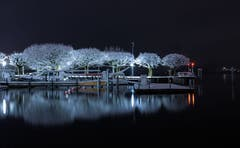 Die winterlichen Bäume spiegeln sich im dunklen See. (Bild: Daniel Hegglin, 10. Januar 2019)