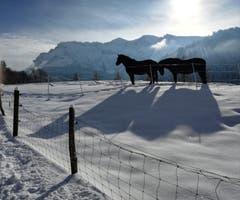 2 Pferde tummeln sich mit Blick auf den Pilatus im Pulverschnee. (Bild: Heidi Birrer (Eigenthal, 11. Januar 2019))