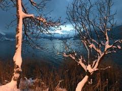 Endlich Winter: Jede Menge Schnee dem See entlang von Oberägeri Richtung Morgarten. (Bild: Enrico Schildknecht (Oberägeri, 11. Januar 2019))