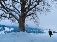 Silvesterchläuse unterwegs im tief verschneiten Appenzellerland. (Bild: KEYSTONE/GIAN EHRENZELLER)