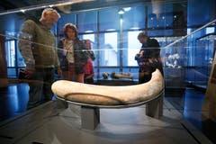 Dieser Stosszahn eines Mammut wurde im heutigen Rotkreuz gefunden. (Bild: Stefan Kaiser (Zug, 13. Januar 2019))