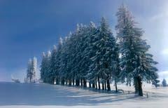 «Herrliches Winterwetter und wunderbare Schneeverhältnisse auf dem Zugerberg», findet unser Leser Peter Bumbacher. (Bild: Peter Bumbacher (11. Januar 2019))