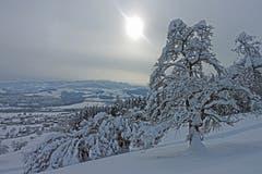 Gewaltige Schneelasten auf den Bäumen auf dem Tannenberg. (Bild: Walter Schmidt)