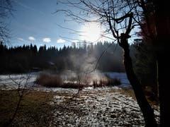 Die wärmenden Sonnenstrahlen bringen im Foremoos den kleinen, mysteriösen Naturteich zum kochen. (Bild: Margrith Imhof-Röthlin, Adligenswil, 15. Januar 2019)