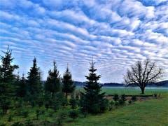 Heute Morgen konnte man wunderbare Schafswolken am Himmel beobachten. (Bild: Urs Gutfleisch, Blatten bei Malters, 15. Januar 2019)