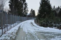 Rechts wachsen die Gratis-Christbäume für die Ortsbürger von Diepoldsau.