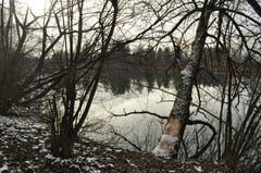 Kein Lüftchen bewegt die spiegelnde Oberfläche des Alten Rheins.