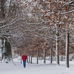 Es schneielet im Stadtpark (Bild: Franziska Hörler)