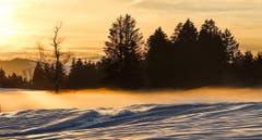 Das Ricken-Hochmoor bei Sonnenuntergang. Bild: Ralph Brühwiler)