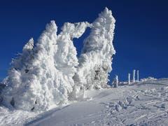 Im Winter-Märchenland: Auf einer Schneeschuhtour auf den Tanzboden-Rieden. (Bild: Petra Mullis)
