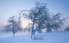 Eisigkalter Morgen in Ettiswil. (Bild: Priska Ziswiler-Heller (Ettiswil, 18. Januar 2019))