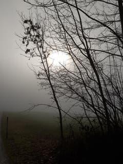 Beim Morgenspatziergang am Waldrand in Sitterdorf. (Bild: Reto Schlegel)