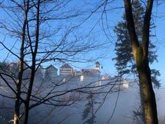 Trogen an der Nebelgrenze. (Bild: Ernst Carniello)