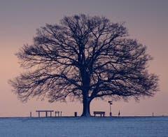 Morgenstimmung beim Iselisberg. (Bild: Stephan Lendi)