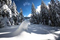 Verschneite Wälder und hat es noch Eisbären? (Bild: Vinzenz Blum (Schrotenegg Glaubenberg, 15. Januar 2019))