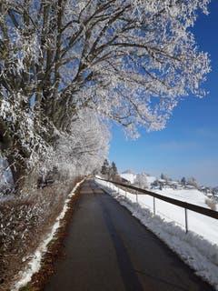 Winterstimmung dank Kälte und Nebel auf dem Höhenweg in Herisau. (Bild: Werner Lieberherr)