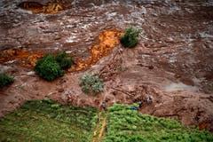 Sie richtet massive Schäden an. (Bild: EPA/Antonio Lacerda)