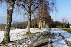 Zwischen Winter und Frühling, auf einer Nebenstrasse nach Wetzwil. (Bild: Josef Habermacher (Schlierbach, 26. Januar 2019))