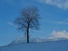 Was für eine wunderschöne, winterliche Stimmung! (Bild: Margrith Imhof-Röthlin (Küssnacht, 25. Januar 2019))