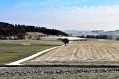 Weisse Nebenstrasse in der Landschaft, im Hintergrund der Bogetenwald. (Bild: Josef Habermacher (Rickenbach, 3. Januar 2019))