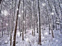 Es schneit zwischendurch wieder mal. Aufgenommen in Sennwald. (Bild: Toni Sieber)