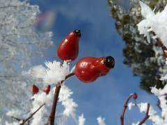 Winterwunder auf dem Höhenweg Herisau. (Bild: Ursula Fröhlich)