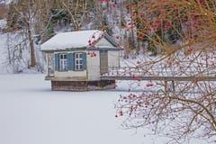 Der Wenigerweiher im Winterkleid...und einem Farbtupfer. (Bild: Franziska Hörler)