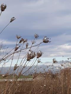 Vom Winde verweht in Zihlschlacht. (Bild: Reto Schegel)