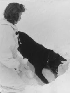 Lawinenhund Anetta beim Kurs auf Trübsee im Winter 1960. (Bild: Mondo Annoni/Fotodok, Staatsarchiv Luzern PA 1374/518.2)