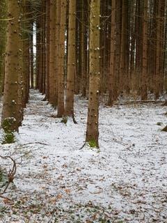 Schneegestöber im Wald im Hudelmoos. (Bild: Reto Schlegel)